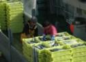 El Gobierno quiere firmar este verano convenios para Grupos de Acción Pesquera
